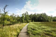 Přírodní rezervací Vás provede 1,2 km dlouhá podlážková naučná stezka
