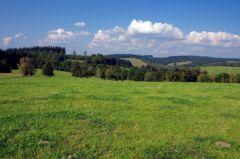Ve Slavkovském lese roste spousta chráněných rostlin